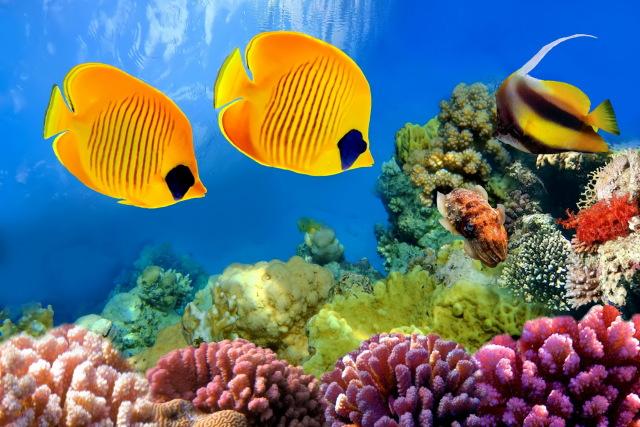Pești tropicali din Marea Roșie