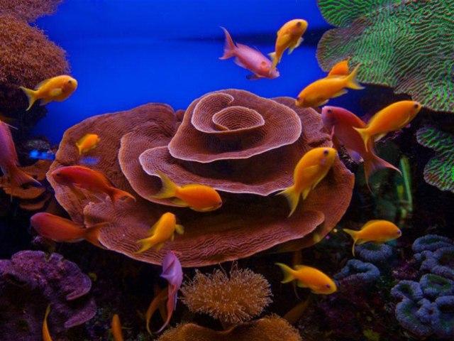 Corali în Eilat - Marea Roșie