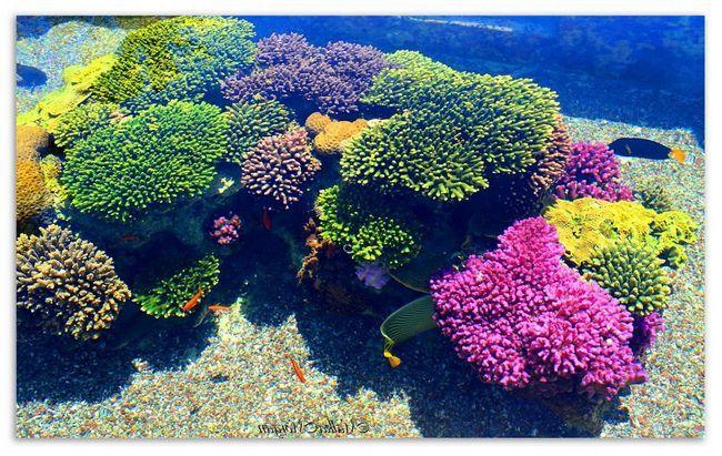 De ce Marea Roșie e roșie ~ Flora și fauna
