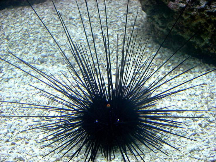 3 pericole în mare și antidoturile lor