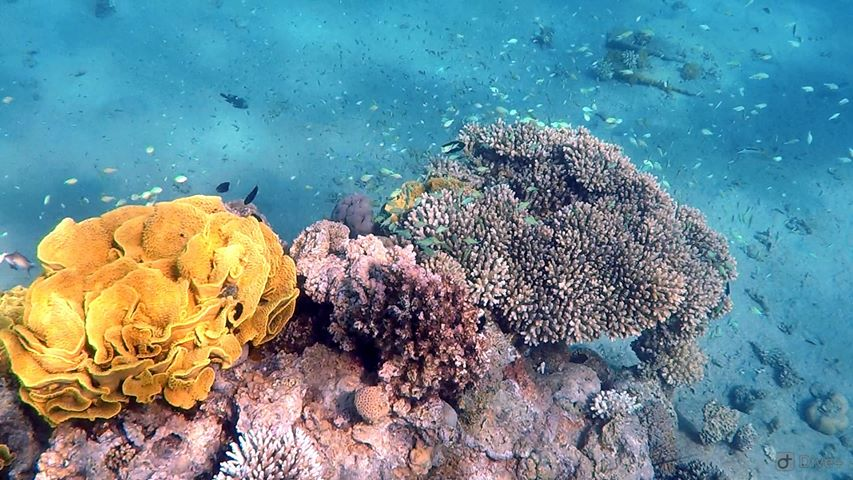 Fundal marin cu corali în Marea Roșie