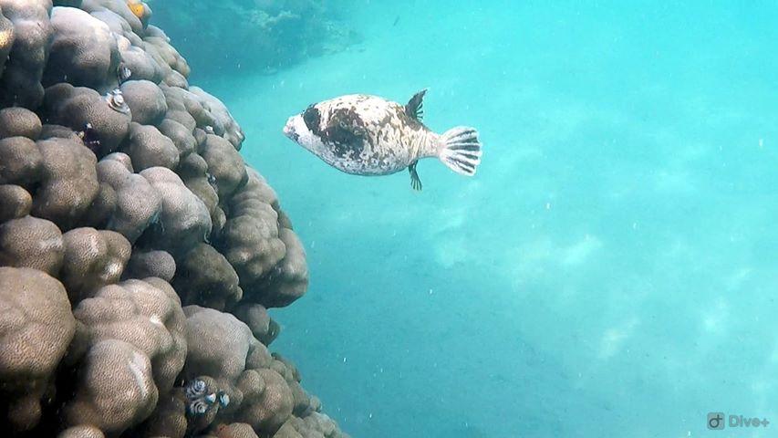 Pește exotic intălnit în explorările noastre subacvatice
