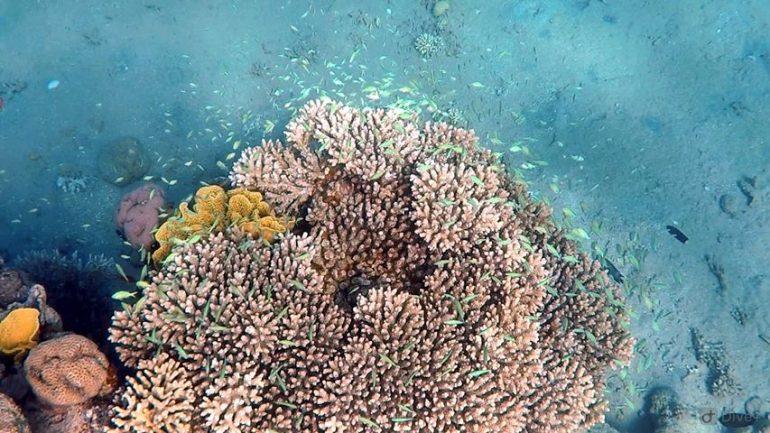 Corali superbi în Marea Roșie