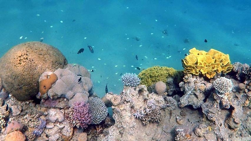 Fundal Marin în Marea Roșie