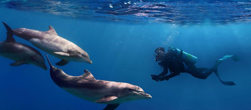 Scufundare subacvatică cu delfini