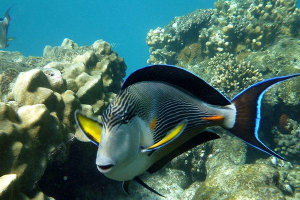 Explorare subacvatică în Marea Roșie