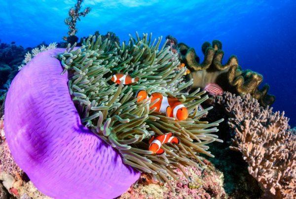 Explorare subacvatică în căutarea adevăratului Nemo