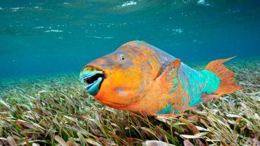 5  lucruri interesante despre peștii-papagal