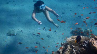 5 meserii subacvatice – diving-ul e și muncă, nu doar fun
