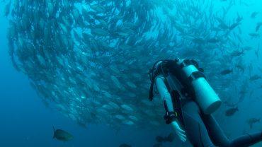 Greșeli de începător în diving
