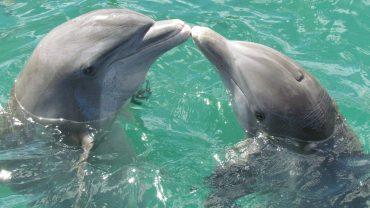 Cu ce specii de delfini pot înota în Marea Neagră?
